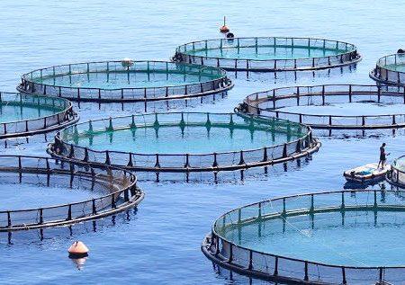 امیری زاده خبر داد: صدور مجوز پرورش ماهی در قفس در استان خوزستان
