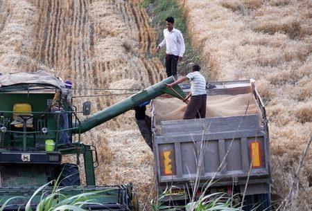 برای برآوردن انتظارات کشاورزی، کمبود نهاده و بذر رفع شود