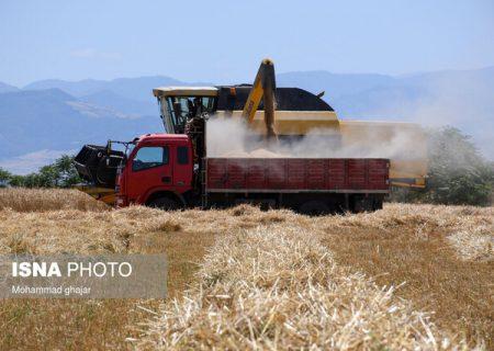 خشکسالی، تولید گندم امسال خوزستان را کاهش نداد