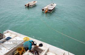 انجام تست از ملوانان شناورهای ورودی از کشورهای حاشیه خلیج فارس