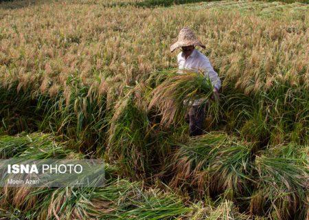 بررسی کشتهای تابستانه در خوزستان در شرایط کمبود آب